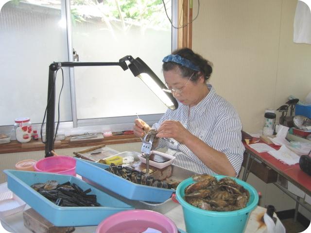 真珠養殖場の珠入れ風景